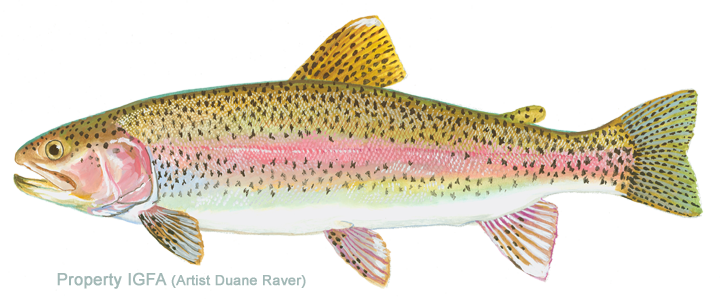 steelhead_trout_rainbow