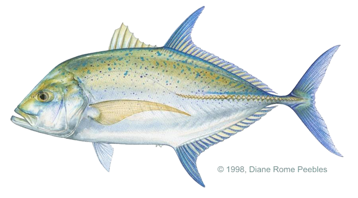 trevally_bluefin